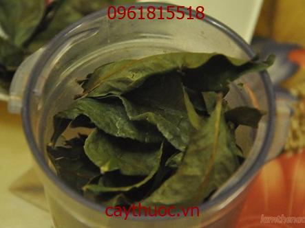 máy xay bột trà xanh