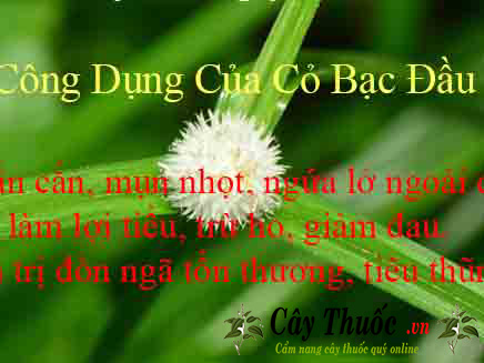 co bac dau tri benh gi