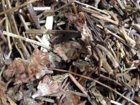 Hạ khô thảo