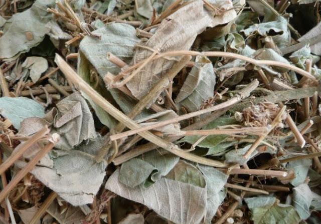 Hình ảnh kim tiền thảo khô