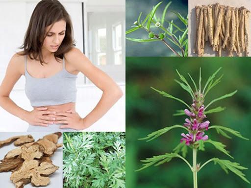 cây ích mẫu chữa viêm loét dạ dày