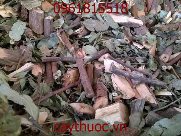 Hình ảnh cây mã đề khô