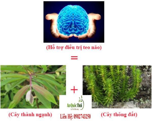 thông đất chữa bệnh teo não