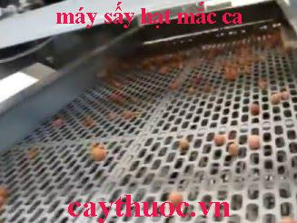 máy sấy hạt mắc ca