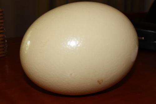 trứng đà điểu