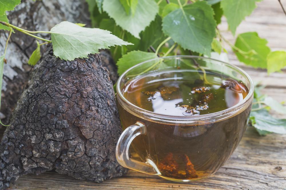 trà nấm vân chi