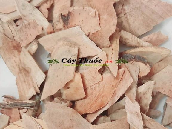 Cây muối là cây gì? Cây muối chữa bệnh suy thận? Mua ở đâu TP HCM?