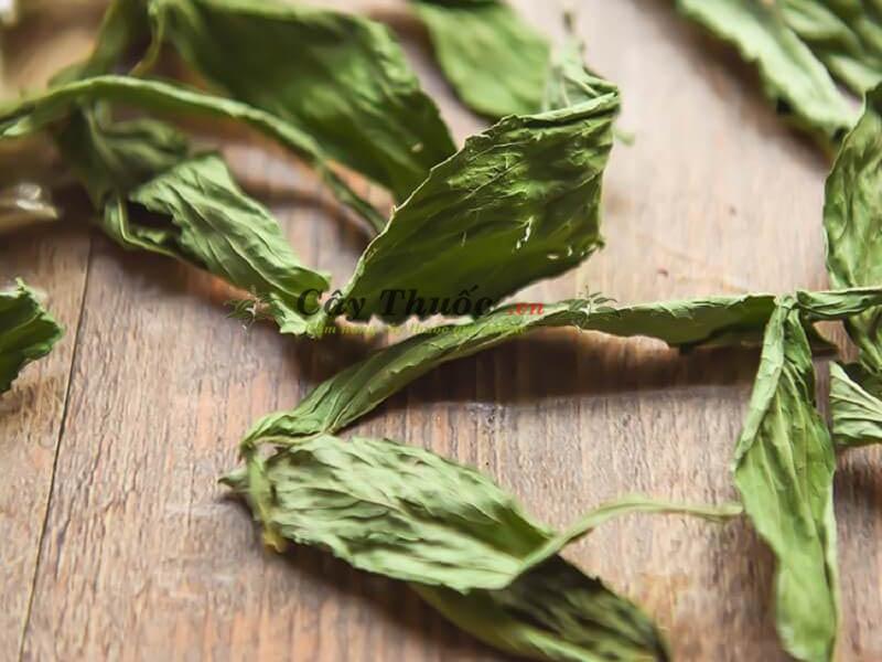 Cỏ ngọt có tác dụng gì? Uống trà cây cỏ ngọt có tốt không?