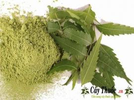 Bột lá neem Ấn Độ [Tác dụng, hướng dẫn sử dụng] giúp da sáng sạch mụn