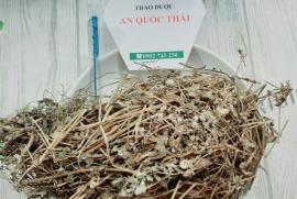 Cây Nở Ngày Đất thảo dược điều trị gout, đau nhức xương khớp hàng đầu