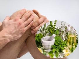 Cây thuốc nam chữa bệnh đau nhức xương khớp hiệu quả nhất