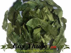 Địa chỉ bán lá neem Ấn Độ uy tín chất lượng nhất