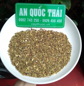 Hoa hòe [tác dụng, cách uống trà] thần dược chữa bệnh huyết áp cao.