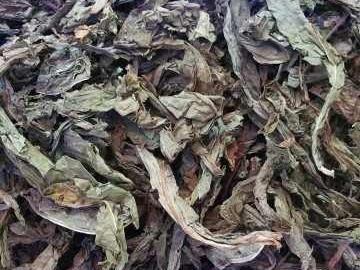 Lá khôi tía (cây khôi tía, nhung) tác dụng chữa đau dạ dày. Mua ở đâu?