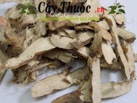 Thủy xương bồ: Tác dụng, cách dùng, lưu ý khi dùng cây thủy xương bồ