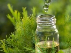 Tinh dầu tràm có tác dụng gì? Cách sử dụng dầu tràm phòng dịch bệnh.