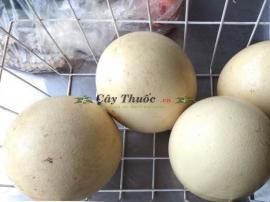 Trứng đà điểu có tác dụng gì? Mua bán trứng đà điểu tại TP HCM uy tín.